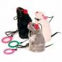 Raton com corda emite sons naturais
