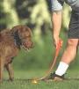 Lançador cachorros