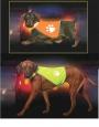 Segurança colete fluorescente