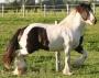 cavalo casa manutenção da qualidade